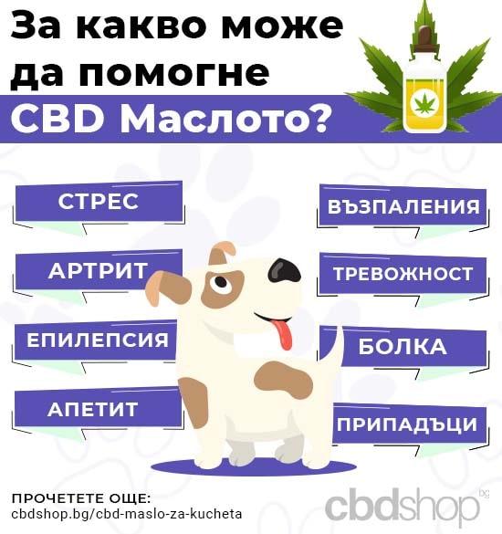 cbd масло за кучета - infographic