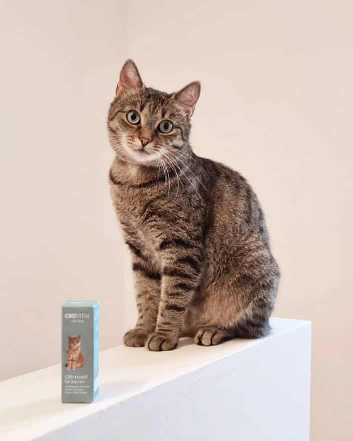 CBD Конопено масло за котки