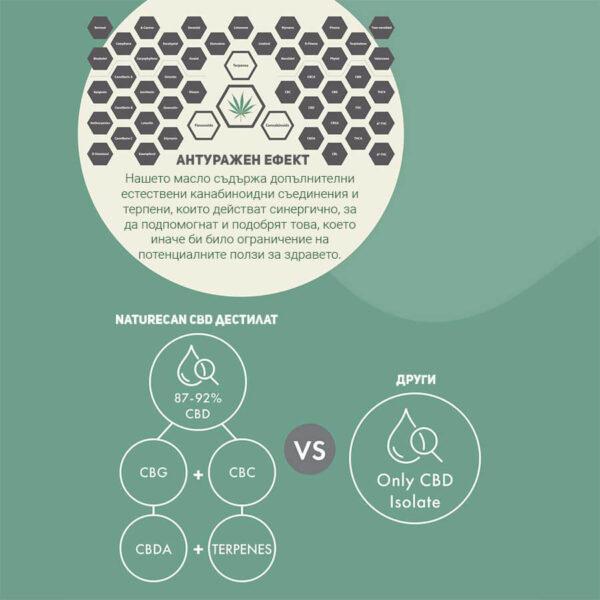 cbd oil - инфографика - naturecan