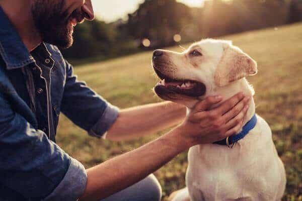 cbd oil for dogs bulgaria